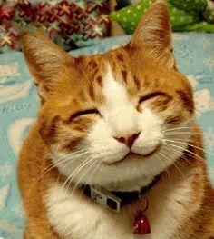 Just Smile! :) #Happy #Feline #Friends
