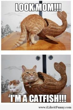 Cat is a catfish.