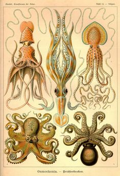 Vintage octopus illustrations to download Octopus Illustration, Nature Illustration, Digital Illustration, Victorian Illustration, Science Illustration, Floral Illustrations, Octopus Species, Octopus Drawing, Back To School Art