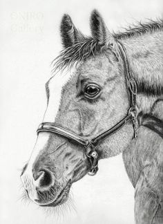 A new horse drawing available in my Etsy shop.