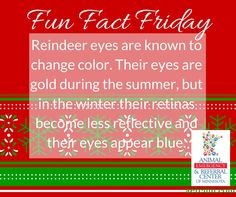 Did you know... #funfactfriday  #TwinCititespetlovers #AERC #reindeer