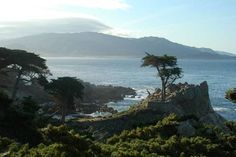The Lone Cypress. drive through Pebble Beach along the Monterey Peninsula in California. Go slow and enjoy the view! One of the most beautiful places I have ever lived! Monterey California, California Vacation, California Coast, California Dreamin', Northern California, Monterey County, Monterey Bay, Oh The Places You'll Go, Places To Travel