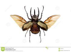 beetle drawing - Szukaj w Google
