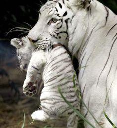 Sibérie et un bébé