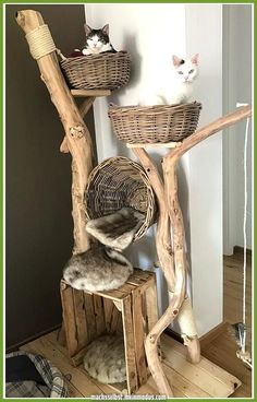 All natural cat tree handmade by Schnurrwerk (Germany) - Katzen - . All natural cat Cool Cat Trees, Cool Cats, Grand Chat, Diy Cat Bed, Cat Beds, Cat Tree House, Cat Towers, Cat Playground, Cat Enclosure