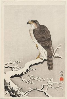 Ohara Koson: Hawk on Snow-covered Branch - 1926