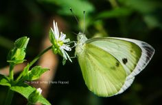 The Small White by Cristian Sirbu on 500px