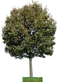 tree 28 png by gd08.deviantart.com on @deviantART