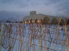 Vineyard near Green Bay :)