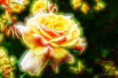 https://flic.kr/p/wnMxtJ   Anticipation   Yellow rose