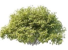 Image result for bush plant
