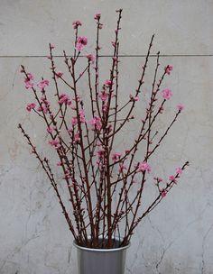Ramas de melocotonero para arreglos florales. #ramas #flores #arreglofloral #moonflowerartefloral #melocotonero #prunus