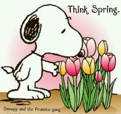 Snoopy - Think Spring More