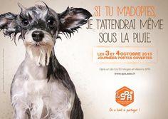 CestFranc - 4 octobre : la journée mondiale des animaux  -   http://apfvalblog.blogspot.com.es/2015/10/4-octobre-la-journee-mondiale-des.html
