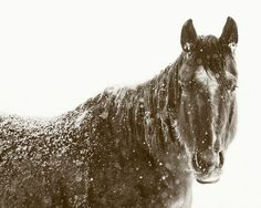 Black Horse Photograph in Winter black and white by ApplesAndOats