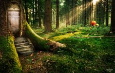 Enchanted Forest Wide Screen High Definition Wallpaper. Dreamy