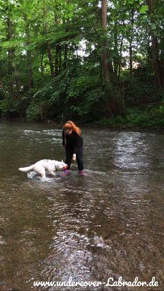 5 Tipps wie dein Hund mehr auf dich achtet – Undercover Labrador