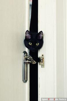 Peek~A~Boo!