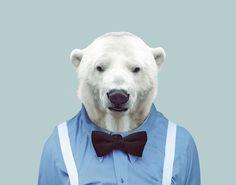 Polar-Bear---Ursus-Maritimus