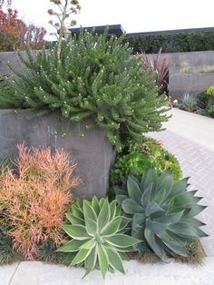 Front Yard Landscaping Create a drought-friendly landscape. (Originally featured on a California-Friendly Landscape Contest hosted by Roger's Gardens in Orange County, CA) - Drought Resistant Landscaping, Drought Resistant Plants, Drought Tolerant Landscape, Succulent Landscaping, Landscaping Plants, Succulents Garden, Rustic Landscaping, Succulent Planters, Succulent Arrangements