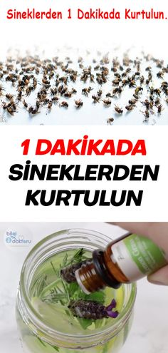 Natural Method of Rescuing the House Flies in 1 Minute Allrecipes, Good To Know, Essential Oils, Food And Drink, Good Things, Healthy, Quotes Inspirational, Ideas, Housekeeping