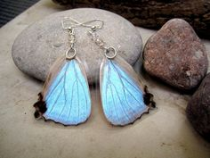 These stunning earrings are made with the bottom wings of a Morpho Sulkowski Butterfly also known as the Mother of Pearl Butterfly. The wings are very pretty nearly translucent pinkinsh grey color. Depending how the light reflects off the scales of the wings, it flashes blue, turquoise, green, purple and white, just like a mother of pearl does. Everyone will ask you where you got them! It is made with Wings layered between two pieces plastic laminate that will keep it protected, however, it…