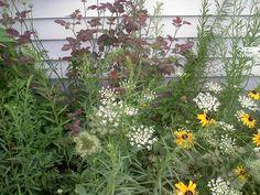 Wildflowers with Rose Bush