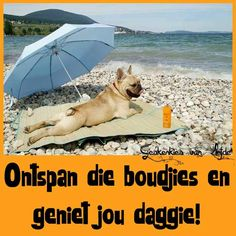 Dogs sunbath too! Good Morning Wishes, Day Wishes, Cute Quotes, Funny Quotes, Afrikaanse Quotes, Goeie More, Morning Quotes, French Bulldog, Haha