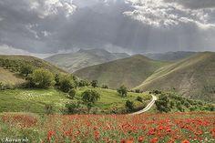 Poppy Field in Sanandaj county, Kurdistan, Iran.