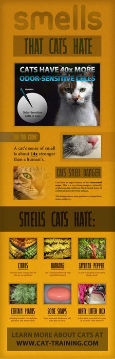 Smells that Cats Hate - great to know! I've already tried the citrus scent in some places. First, I checked to see how my cat reacted to the smell of lemon on my hand. She backed away from it, so I thought it would make a great repellent. :-)
