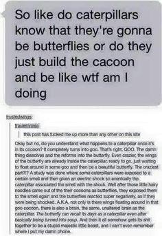 Dude >> welp new found respect for caterpillarflies