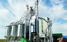 O afacere unică în Europa înfloreşte în Bihor: fabrica de ulei de cânepă