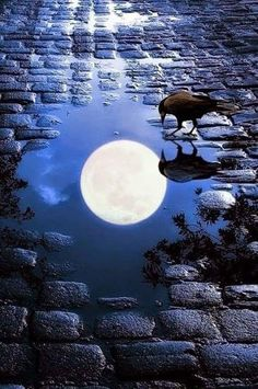 Good night hd pictures good night hd wallpapers photo pics images free for whatsapp fb wallpaper nature park night moon tree bench secret hd beautiful night Moon Moon, Blue Moon, Cool Photos, Beautiful Pictures, Nature Landscape, Shoot The Moon, Moon Pictures, Moon Magic, Beautiful Moon