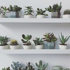 This this this I wish my home looked like this! Photo by @gatherhomelifestyle || @succulentcity #succulentcity #succulents #succulent #succulove #succulents_only #succulentlove #succulentgarden #succulentgarden by succulentcity