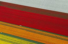Aerial Photos of Tulip Fields in the Netherlands | HYPENOTICE.COM