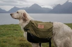 Canine Bug Out Bag Homesteading - The Homestead Survival .Com