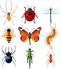 art insects - Google Search