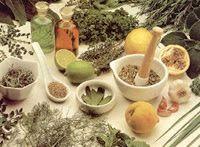 PLANTAS MEDICINAIS  FITOTERAPIA: Preparação e manipulação das plantas medicinais