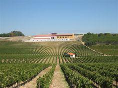 Adega Campolargo Wine Cellar - Anadia, Portugal
