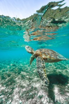 Cairns Australia, Visit Australia, Australia Travel, Animals Information, Best Beaches To Visit, Mission Beach, Snorkelling, Great Barrier Reef, Day Trip