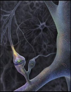 Neuron   Cajal Blue Brain Project via Sam Pryor so cool!!! You can see the action potential building