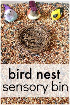 Bird Nest Sensory Bin for toddler sensory play or a preschool bird theme