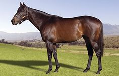 Twice Over - Freemanstallions - Present and Future Champion Sires