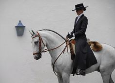 Elements of a Great Rider College Program - Basic Guide About Horse Most Beautiful Horses, All The Pretty Horses, Horse Photos, Horse Pictures, Equestrian Outfits, Equestrian Style, Andalusian Horse, Arabian Horses, Pur Sang