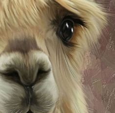 Suri Alpaca Baby, Cathy Cathcart, just look at that loving eye, how could you not love them. Impossible.