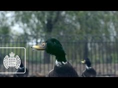 ▶ Bingo Players ft. Far East Movement - Get Up (Rattle) (Official Video) - YouTube