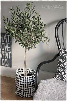 Oliivipuu sisällä