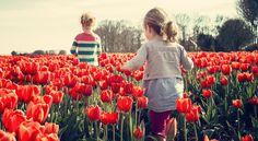 Holandia to nie tylko tulipany i wiatraki, ale także ambitna, nieszablonowa muzyka  www.polskieradio.pl YOU TUBE www.youtube.com/user/polskieradiopl FACEBOOK www.facebook.com/polskieradiopl?ref=hl INSTAGRAM www.instagram.com/polskieradio