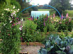 The cutting garden in my new veggie garden......