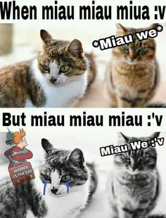 Miau miau miaumiamiau >:,,v